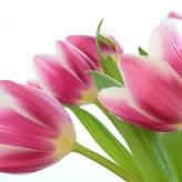 Niederlande: Mehr als Tulpen, Käse und Frau Antje